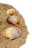 Seashells Lizenzfreie Stockfotografie