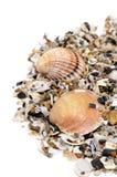 Seashells Fotografía de archivo libre de regalías