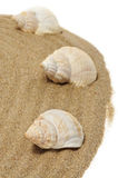 Seashells Stock Image