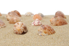 Seashells image libre de droits
