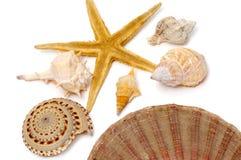 Seashells fotografie stock libere da diritti