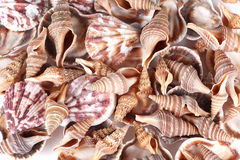 Seashells image stock