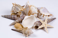 Seashells. Different types of beautifull seasherlls stock photos