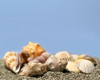 Free Seashells Royalty Free Stock Photos - 1844968
