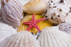 Seashells Royalty Free Stock Images