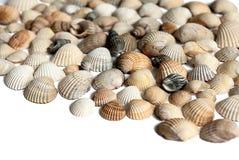 Seashells photographie stock