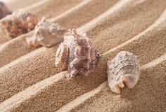 Seashells Immagine Stock