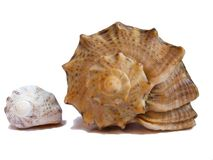 seashells 2 Стоковая Фотография RF