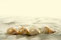 Seashells (2) Stock Image