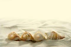 Seashells (2) stockbild