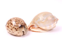 Seashells 2 Royalty Free Stock Photos