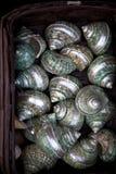 seashells Стоковые Изображения RF
