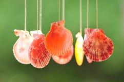 Seashells Royalty Free Stock Images