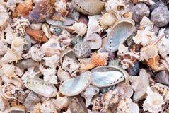 Seashells. photos stock