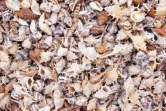 Seashells. photos libres de droits