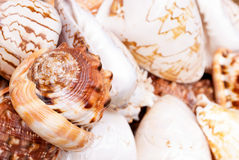 Seashells. Stock Photo