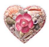 Seashells Royalty Free Stock Image