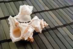 Seashells. images stock