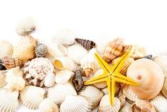 Seashells. photographie stock libre de droits