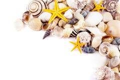 Seashells. photographie stock
