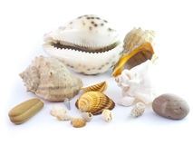The  seashells Stock Photo