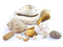 The  seashells Stock Photo