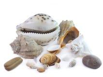 The  seashells Royalty Free Stock Photo