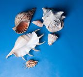 Seashells photographie stock