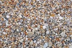 Seashells images stock