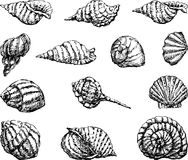 Seashells illustration de vecteur