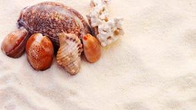Seashells Lizenzfreie Stockfotos