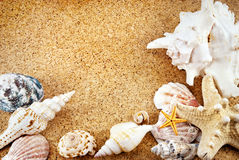 Seashells. Stock Photos