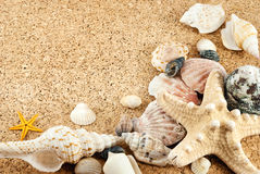 Seashells. Stock Images