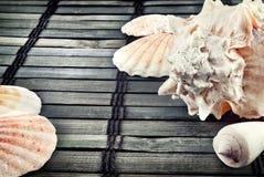 Seashells. photo stock