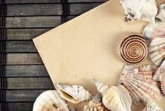 Seashells. image libre de droits