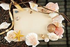 Seashells. photo libre de droits