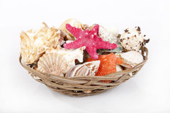 Seashells. Collection of seashells in basket Stock Images