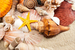 Seashells. Royalty Free Stock Photography