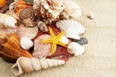 Seashells. image stock