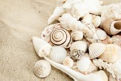 Seashells. Royalty Free Stock Photos