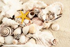 seashells Стоковые Фото