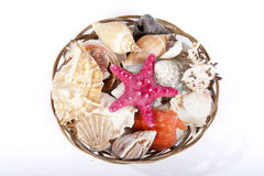 Seashells. Different type of seashells in a basket royalty free stock photo