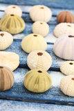 Seashells. Variety of seashells on a sandy table Royalty Free Stock Photos