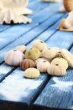 Seashells. Variety of seashells on a sandy table Royalty Free Stock Image