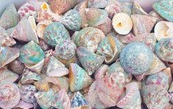 Seashells photographie stock libre de droits