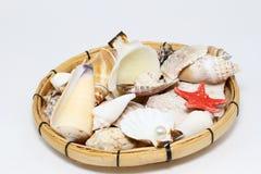 Seashells Zdjęcia Royalty Free