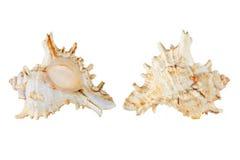 Seashells. images libres de droits