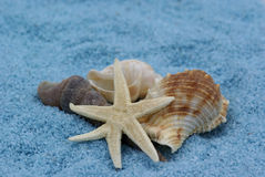 Seashells. Fotos de Stock Royalty Free