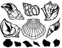 Seashells. Set of black and white sea shells - collection of fine vector outlines Stock Photography