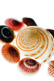 Seashells. An array of differently colored seashells Stock Image